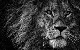 Assad-The lionheart
