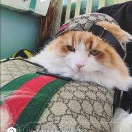Gucci_Cat