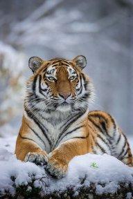 JaguarPaw