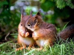 WillSquirrel