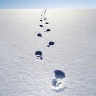 FootprintsInTheWinter