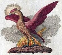 Phoenix234