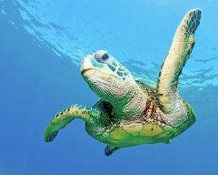 TurtleBrah