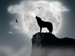 Brave Wolf