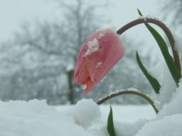 winterjay