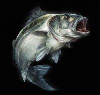 Sea bass a la Russe