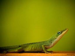 Lizardbrain333