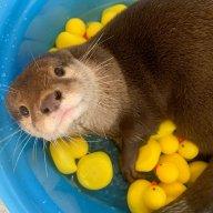 Struggling-Otter